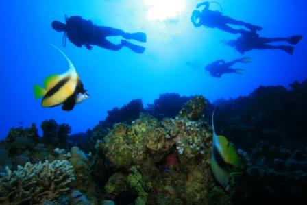 Philippines Fish and Scuba Divers