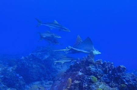 Corn Island Diving