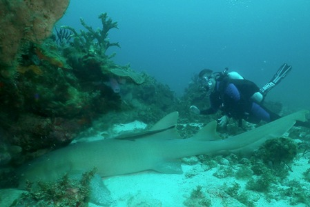 Tom and Nurse shark