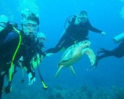Cayman Brac Toucan Divers with turtle