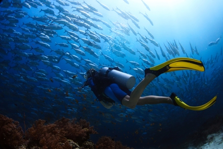 Dive Bonaire scuba diver with fish life