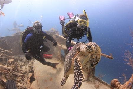 nassau shark dives