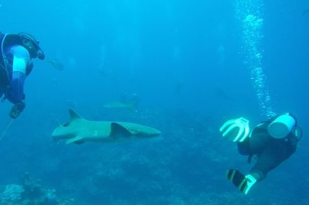 belize.nurse.sharks