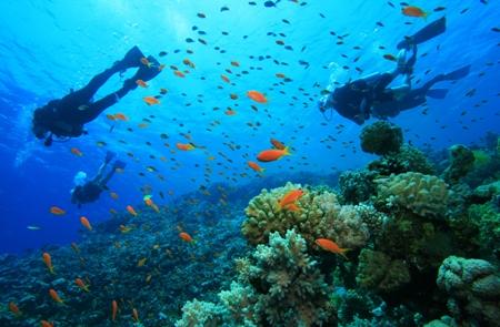 Fiji Taveuni Reef Diving