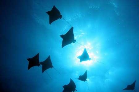 Turks & Caicos Spectacular Diving